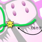 CS9-10 pacing